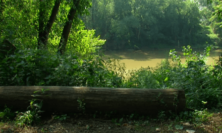 Man dies after trying to swim across Licking River
